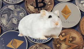 Office Hamster Beats the S&P 500 by Trading Crypto Tokens