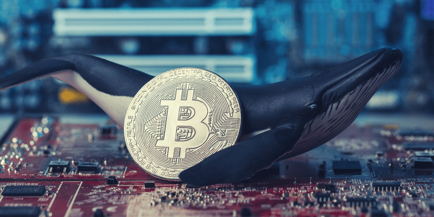 Whales and HODLers Dominate as 70% of Bitcoin Hasn't Moved in Five Months