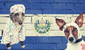 El Salvador to Use Bitcoin Profits to Build $4 Million Pet Hospital